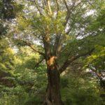環境問題のイメージは? ~間伐と人工林とお金の話~