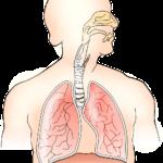 「口呼吸と鼻呼吸」呼吸の仕方1つとっても身体への悪影響が半端ない?