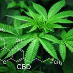 大麻取締法で禁止されていることとは? ~合法と違法の境目~