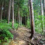森林管理制度により、森林はプロが担う!? 財源確保はやっぱり⚪金・・・