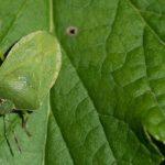 怖いのは人体に影響を与える感染症だけじゃない! 農作物と病害虫対策