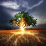 雷で「高い木の側は危険!」というけれど・・・ 保護範囲が取れない高さとは?