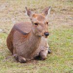 ガリガリの鹿が話題だけど・・・ 「鹿煎餅が原因」とは誰も言ってない!?