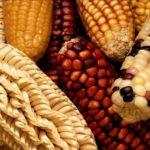 食品表示の改正は、遺伝子組み換え表示も例外じゃない!?